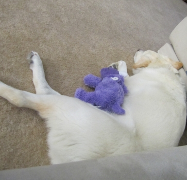 07-06-2012-01-her-first-toy-in-her-new-home.jpg